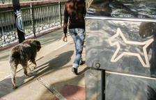 """Els comuns estudien crear """"una nova figura"""" per recollir les tifes de gossos"""