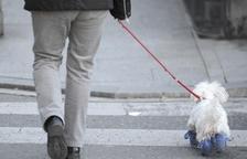 Gossos humanitzats
