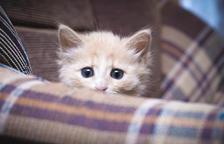 Com afecten els petards als animals?