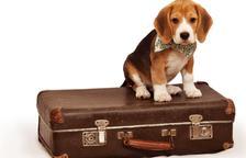 Viatges i mascotes, què fem?