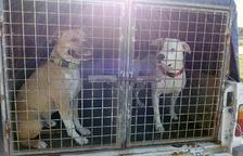 Judici per l'atac dels gossos d'una dona del país a un home a Llagostera