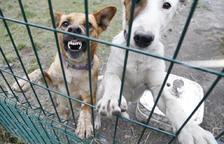 Un jove resulta detingut per robar una gossa de la canera
