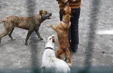 Detingut per tercer cop per robar un gos