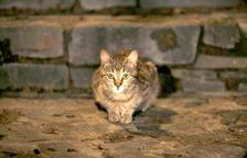 Denuncien trets de balí a una colònia de gats a SantaColoma