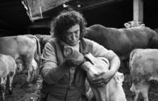 La ramaderia al seu laberint