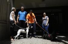 Laika protestarà a la Batllia pel cas dels gossos morts en un pis