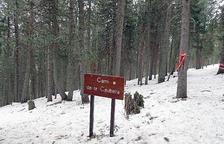 Entre boscos i pistes