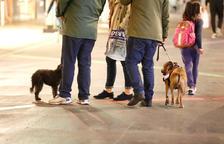 Tres mesos condicionals per a un home que va maltractar el seu gos