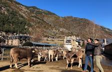 Mortés i Betriu han visitat una explotació ramadera d'Arans