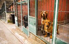 L'anàlisi descarta que els gossos morts  fossin enverinats