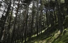Andorra col·laborarà en un projecte pel seguiment de les poblacions d'óssos i llops