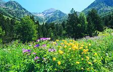 Andorra formarà part d'una xarxa de laboratoris botànics pionera a Europa