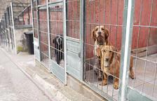 Govern pagarà tres euros al dia per cada gos i 29 cèntims per cada gat de la canera