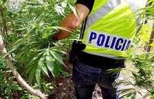 La policia analitzant la plantació del jubilat al rec del Solà.