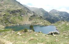 Pic o llac?