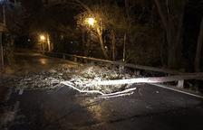 Un arbre caigut enmig d'una carretera