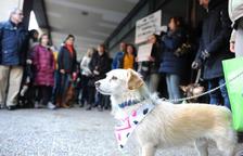 Els contraris a la taxa als gossos es manifestaran a Andorra la Vella