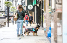 La taxa comunal per tenir gos serà de 25 euros l'any