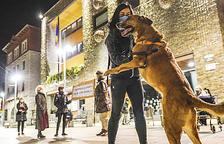 La taxa per tenir gos i les PCR per entrar a Espanya, als set tuits