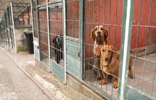 Andorra la Vella no cobrarà la taxa als propietaris de gossos adoptats