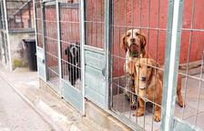 Tres comuns fan exempcions a les taxes dels gossos si els animals són d'adopció