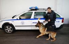 A favor dels controls policíacs amb gossos a les escoles