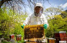 """""""Les abelles són importants per preservar l'ecosistema"""""""