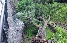 La caiguda de dos arbres talla el camí Ral entre la Massana i Escaldes