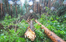 Les destrosses a la zona del bosc de l'Aldosa.