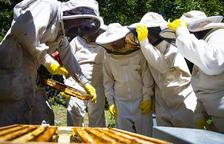 Ser apicultor durant un dia, una de les novetats turístiques d'estiu de la capital