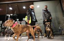 Els cadells de gossos de races perilloses seran castrats