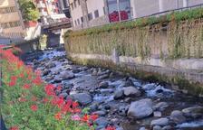 Els geranis del passeig del riu