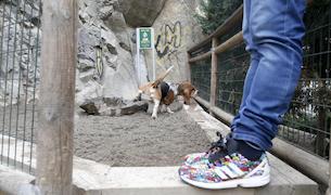 Un gos fent ús d'un pipicandels que hi ha a la capital.