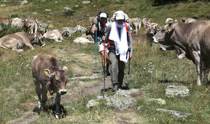 Convivència a la muntanya d'excursionistes i ramats