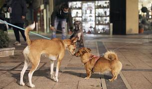 Dos gossos es troben al centre de la capital.