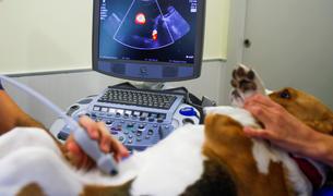 Un veterinari fent una ecografia a una mascota.