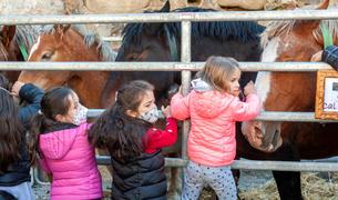 Tres nenes observen els cavalls a la Fira del Bestiar de Canillo.