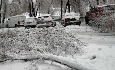 El temporal ha provocat la caiguda d'arbres a Prada Casadet