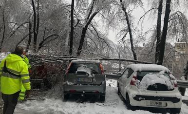 Arbres caiguts a la zona de Sa Calma d'Escaldes per la nevada