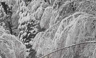 La caiguda d'arbres ha provocat talls de trànsit a la carretera de la Plana
