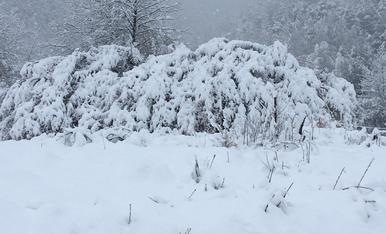 Paisatge de la Cortinada aquest matí
