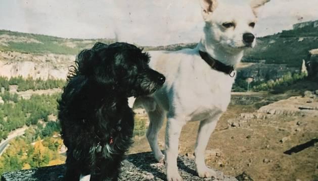 7. Tot el que em pot aportar un gos per mi és fonamental. Aquestes són les meves gosses, però una ja no hi és.