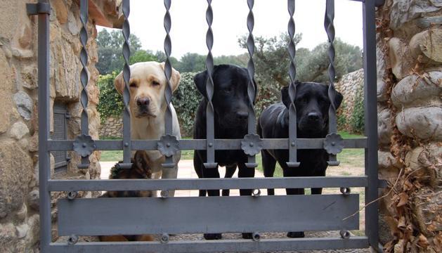 7. Tinc gossos i rucs, uns animals que són una peça clau en la meva vida.