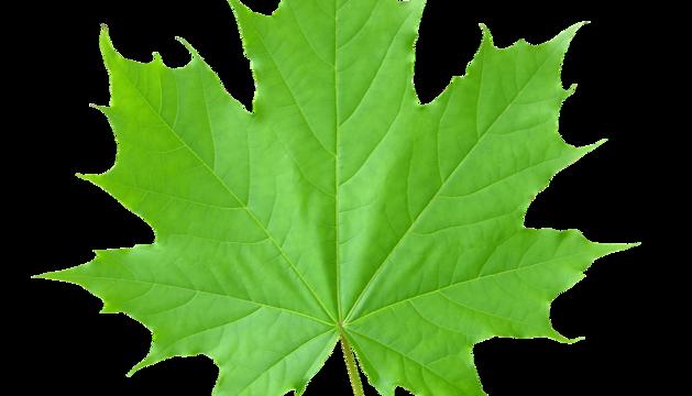 El color verd, de la natura, l'esperança i els vegetals.