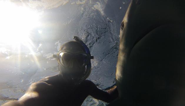 Una 'selfie' amb un tauró a Tailàndia