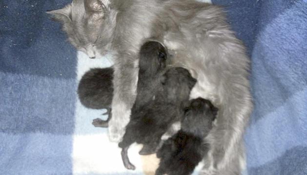 La gata i els quatre cadells abandonats.