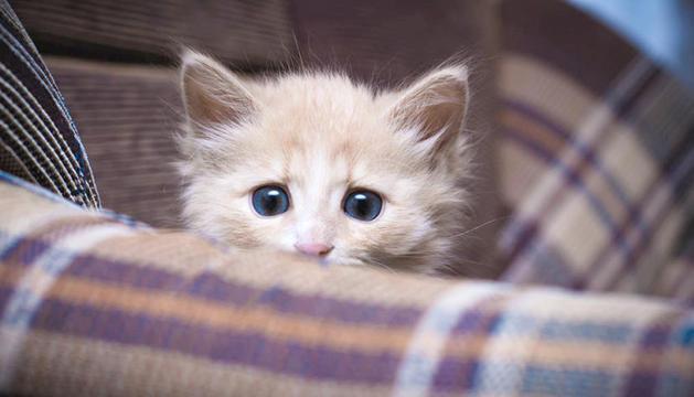 Els gats també pateixen els efectes dels petards.