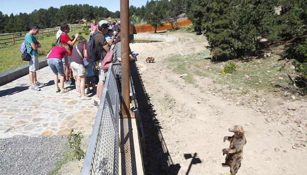 El parc d'animals reobrirà deu dies després que un treballador matés de dos trets un dels ossos de Naturlandia.
