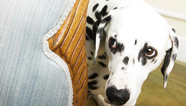 Superar la por ajuda els gossos a créixer saludablement.