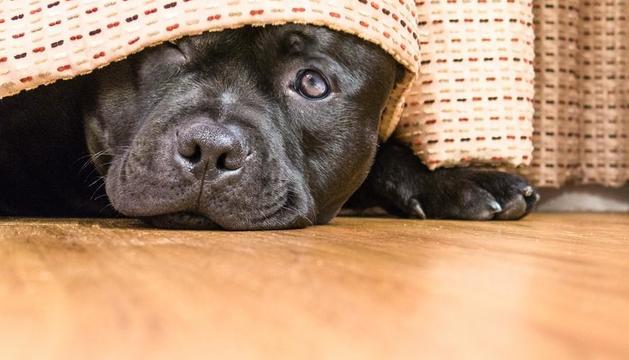 Si el gos té por del carrer no és bo obligar-lo a sortir.